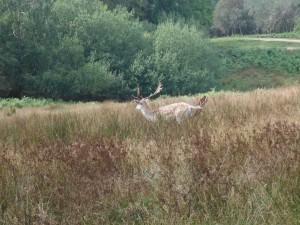 spotting a deer